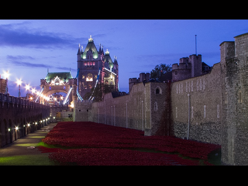 Com Poppies at Dawn by Peter Shearer