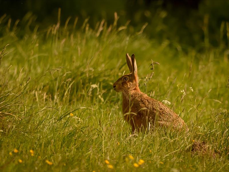 HC Hardwick Hare Neil Douglas