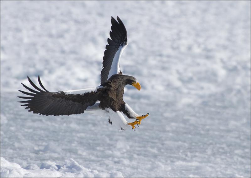 Stella Eagle Landing