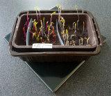 Indoor Seedlings