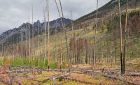 Fire and re-growth, Alberta
