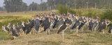 Marabou stalk assembly