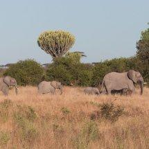 Elephant Family, Ruha, Tanzania