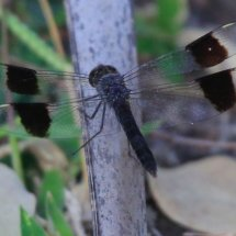 Insect, Selous, tanzania