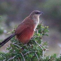 Tanzanian Bird 4
