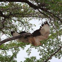 Tanzanian bird 2