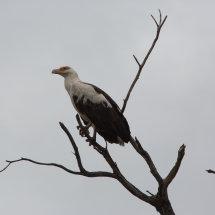 Tanznian bird