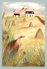 121 The Corncrake and the Croft 1
