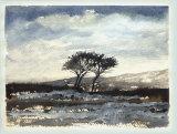 132 Moorland Trees
