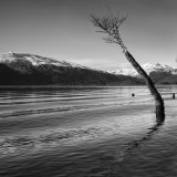 tree - loch lonmond
