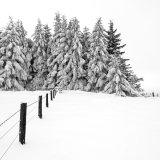Alston Pines