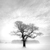 Langwathby Tree