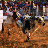 Cowtown Rodeo_NJ