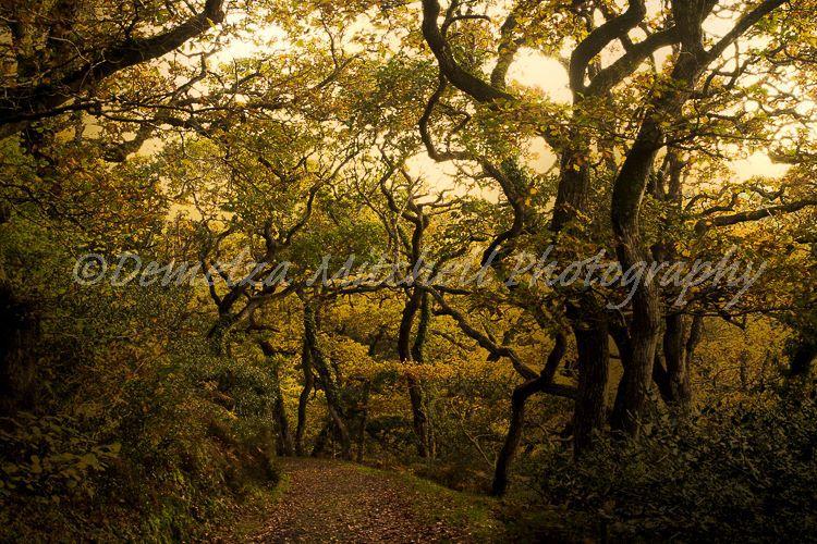 Cornish Woodland Path