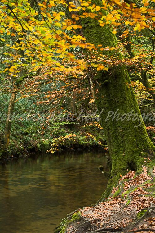 Autumn colours, Golitha Falls, Cornwall