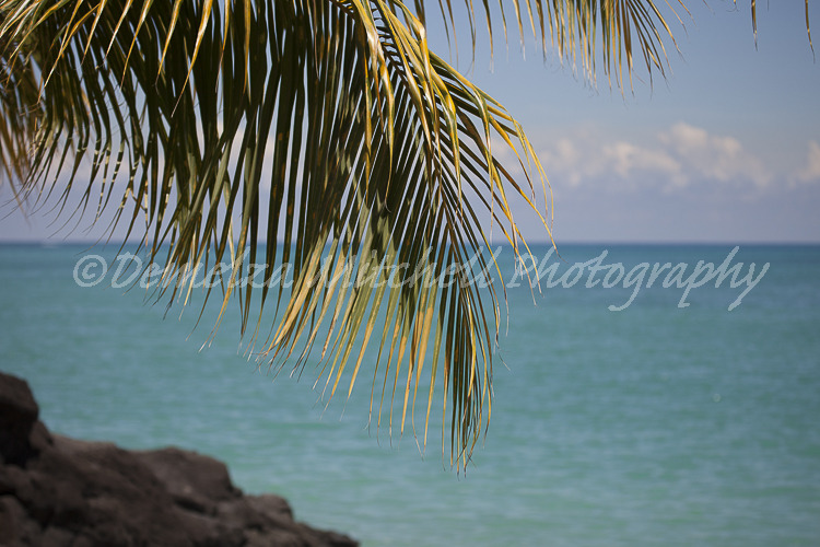 Palm, Mauritius