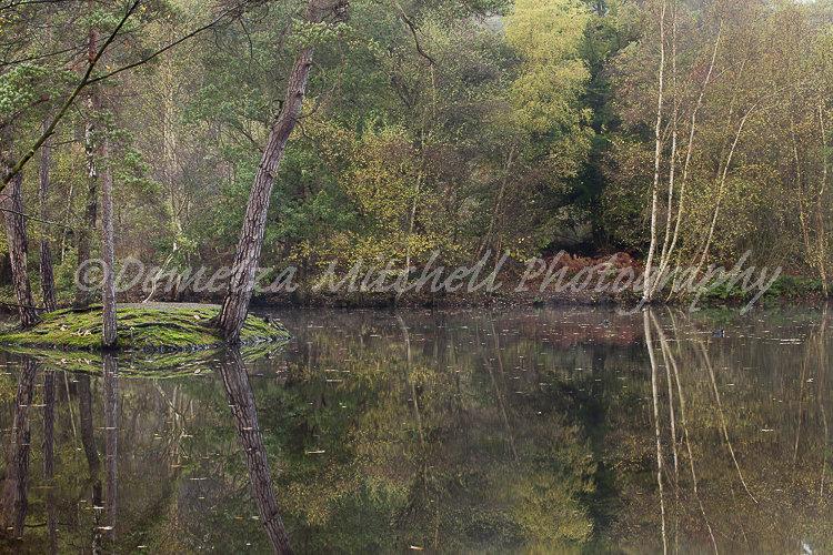 Reflections - Simon's Wood, Berkshire