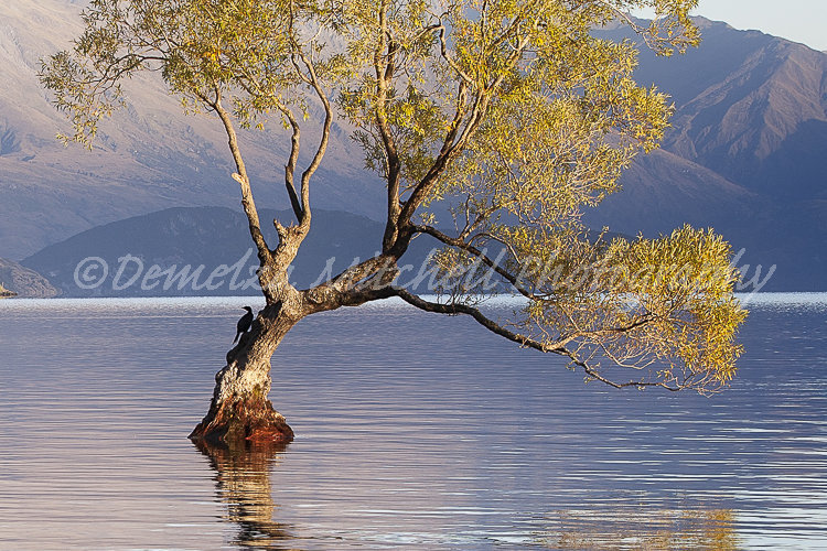 Willow Tree and Bird, Lake Wanaka