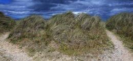 Grasses at Findhorn Beach