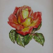 Picadilly Rose