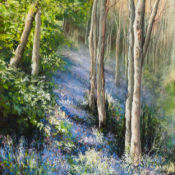 The Bluebell Wood