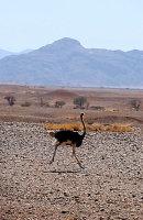 A Namib 11