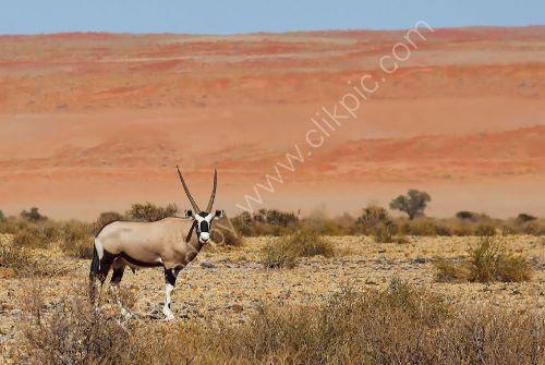 A Namib 12