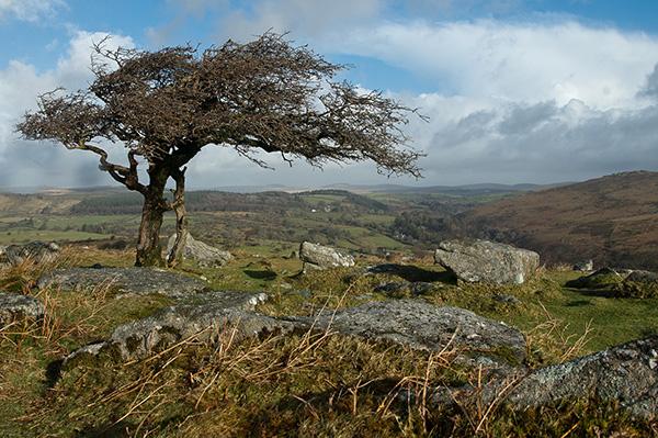 Quintessentially Dartmoor