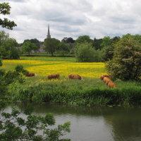 Buttercup Heaven - David Wilkinson