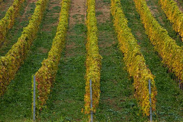 Golden lines of autumn