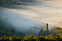 Foggy road, Plesivica hills, Croatia