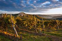 Dawn of the grape harvest day in Motovun, Istria, Croatia