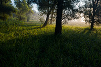 Misty morning in Motovun forest, Istria, Croatia