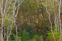 Hidden nature altar