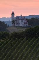 Vineyard and the church of St.Vid near Plesivica hill, Croatia