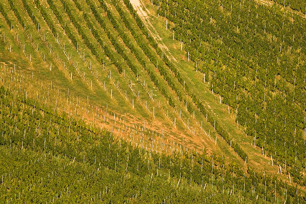 Vineyard's geometry