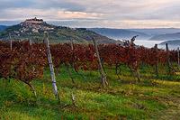 Motovun vineyards by dawn, Istria, Croatia