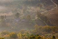 Fog in Motovun vineyards, Istria, Croatia