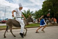 Donkeys race