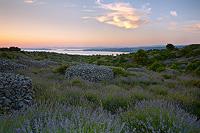 Lavender fields in sunset, Island Hvar, Dalmatia, Croatia