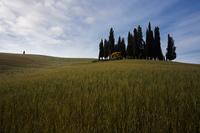 Springtime near San Quirico d'Orcia, Tuscany, Italy