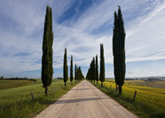 Cypress road of San Giovanni d'Asso in Tuscany, Italy