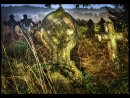 Forgotten Grave Yard
