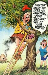 Picking Plums