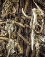 Cattle Skulls, Santa Fe