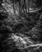 Sunlit Woodland Glade, Dalcairney Falls