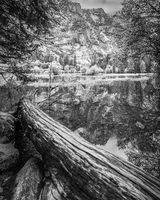 Fallen Tree, Mirror Lake
