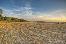 Suffolk Countryside - Late Summer