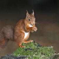 Squirrel 14