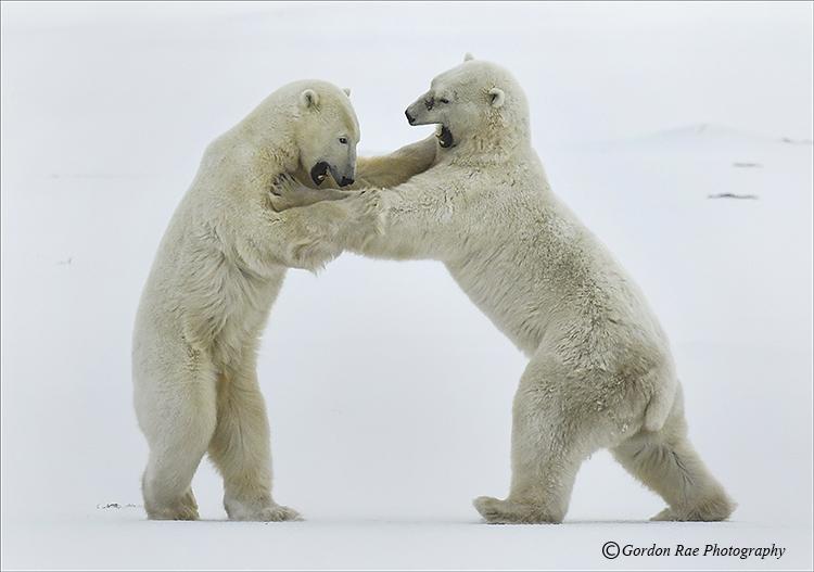 Frosty Confrontation